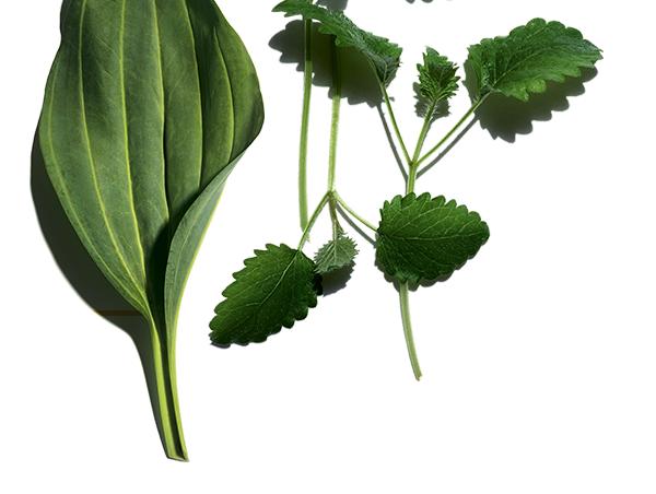 Rośline