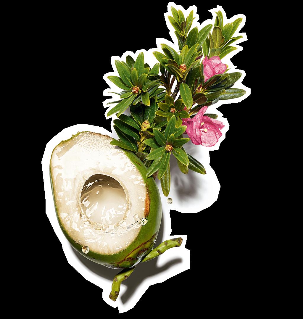 Wizuel z wodą kokosową i różanecznikiem alpejskim