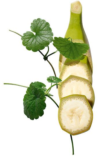 Plantes Banane Bio et Centella Asiatica