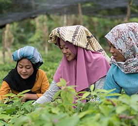 Młode kobiety na polu ryżowym
