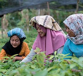 Zdjęcie kobiet pracujących na polach ryżowych