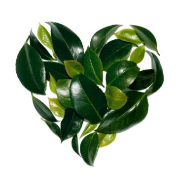 Liście w kształcie serca