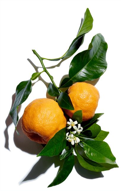 Wosk Z gorzkiej pomarańczy
