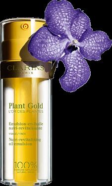 błękitna orchidea