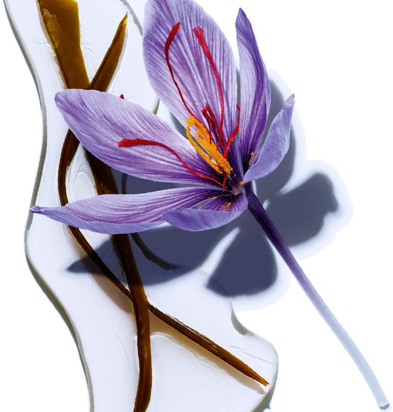 Alga - Organiczny kwiat szafranu